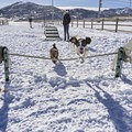 Rockin' the agility park for dogs at the Round Valley Trails.- Round Valley Trails, Quinn's Trailhead
