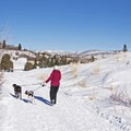 The North Basin Trails are a great place for dogs on leash.- North Basin Trails, Woods Trailhead