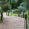 The short trail winds through the sanctuary.- Monarch Butterfly Sanctuary