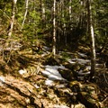 The trail can be virtually snow free in certain sections.- The Carters