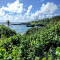 Thick, green shrubs create a barrier between the trail and the water along parts of the coastline.- Wai'ānapanapa State Park