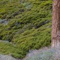 Traversing the Fall Creek Trail.- San Gorgonio via Momyer Creek Trail + Vivian Creek Trail