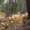 Fall color on Alger Creek.- San Gorgonio via Momyer Creek Trail + Vivian Creek Trail