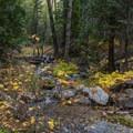 Fall color on Alger creek - San Gorgonio via Momyer Creek Trail + Vivian Creek Trail