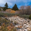 San Bernardino Peak Divide Trail. - San Gorgonio via Momyer Creek Trail + Vivian Creek Trail