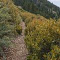 San Bernardino Peak Divide Trail.- San Gorgonio via Momyer Creek Trail + Vivian Creek Trail