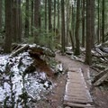A walkway helps preserve the trail in the wet season.- Little Si