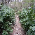 Sections of the trail are narrow.- Boulder Gardens Loop