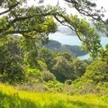 Native trees on Angel Island include oak, bay, and madrone. Introduced tree species include eucalyptus and Monterey pine.- Mount Livermore