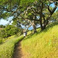 Mount Livermore can also be a great springtime destination to look for wildflowers. - Mount Livermore