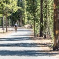Paulina Campground road.- Paulina Lake Campground