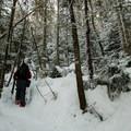 Snowy herdpath to Seymour Mountain.- Seymour Mountain