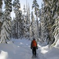 Snowshoeing in the Willamette National Forest.- Odell Overlook Trail