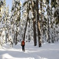 Snowshoeing in the Willamette National Forest.- Diamond View Loop