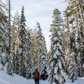 Snowshoeing on the Diamond View Loop Trail- Diamond View Loop