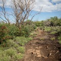 Eventually the trail leaves the forest for open views.- Ala Kahakai National Historic Trail: Spencer Beach to Mau'umae Beach