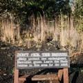 The ōhelo berries are a good food source for the nēnē, an endangered Hawaiian goose.- Devastation Trail