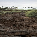 The Mauna Lani Golf Club is visible in the distance from the trail.- Kalahuipua'a Trail + Fishponds