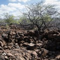The foundations for structures remain in place in the lava flows that surround the petroglyphs at the Kīholo Bay State Park Reserve.- Kīholo State Park Reserve