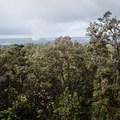 Dense forest and an annihilated landscape along the Kīlaeua Iki Trail. - Kīlauea Iki Trail
