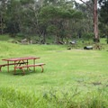 The open tent area for first-come, first-served campers at Nāmakanipaio campground.- Nāmakanipaio Campground + Cabins