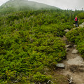 Trail on the ridge.- North Twin, South Twin + Galehead Mountains