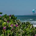 Jalama Beach.- Jalama Beach Campground