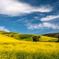 The drive out Jalama Road is stunning in April.- Jalama Beach Campground