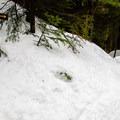 Deep snow on the trail to Sawteeth.- Sawteeth Mountain