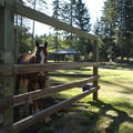 Typical horse stalls at Hares Canyon Horse Camp, L.L. Stub Stewart State Park.- Hares Canyon Horse Camp