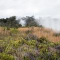 The Sulphur Banks, Hawai'i Volcanoes National Park.- Sulphur Banks + Crater Rim Trail Loop
