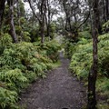 Returning on the Crater Rim Trail.- Sulphur Banks + Crater Rim Trail Loop