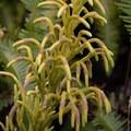 Unidentified species (help us identify it by providing feedback).- Sulphur Banks + Crater Rim Trail Loop