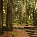 A couple of sites are elevated on a platform.- Roberts Creek Provincial Campground