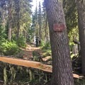 Abandoned trailhead from the east side of Big Lake.- Mount Washington Backcountry Ski: Northwest Bowl