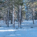 Fresh powder along the Mammoth Scenic Loop.- Mammoth Scenic Loop Snowshoe