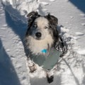 Make sure to dress your dogs properly when bringing them into cold weather conditions.- Mammoth Scenic Loop Snowshoe