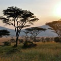 Sunset in the Masai Mara.- Masai Mara National Reserve