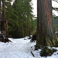 Snowshoeing to Ipsut Falls along the Carbon River.- Carbon River to Ipsut Falls