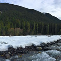 Trail along the Carbon River.- Carbon River to Ipsut Falls