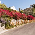 The road proceeds past beautiful landscaping.- Hollywood Sign via Lake Hollywood Drive