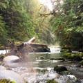 Lower Gray Wolf River.- Lower Gray Wolf River