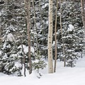 - Mill D North to Dog Lake Snowshoe