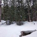 Routefinding near Clear Lake in winter.- Clear Lake Snowshoe