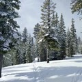 Separate ski and snowshoe tracks near Swampy Lakes Sno-Park help reduce user conflict.- Nordeen Shelter via Snowshoe Long Loop