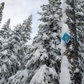 Follow the snowshoe signs and find nearly empty trails.- Nordeen Shelter via Snowshoe Long Loop