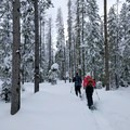 Snowshoeing to Nordeen Shelter.- Nordeen Shelter via Snowshoe Long Loop