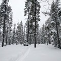 Snowy trees near Swampy Lakes.- Nordeen Shelter via Snowshoe Long Loop