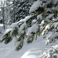 Heavy snow cover near Swampy Lakes.- Nordeen Shelter via Snowshoe Long Loop