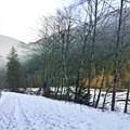 Carbon River Trail.- Carbon River to Ipsut Falls